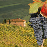Join us for an Italian Wine Dinner on Thursday, April 19th. Reserve your table today!