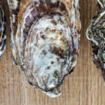 Save the Date! Oyster Roast – November 14, 2021