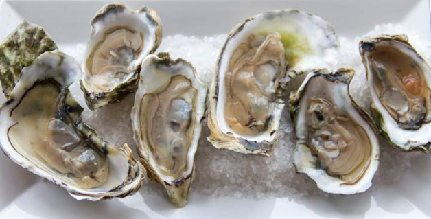 North Carolina Oyster Week:  October 12 to 16  (Click here for information.)