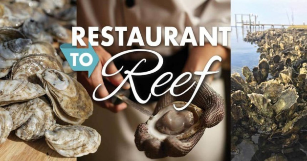 """Restaurant to Reef"" – 'Outer Banks Coastal Life Magazine' Article on Blue Water's Oyster Recycling Efforts"