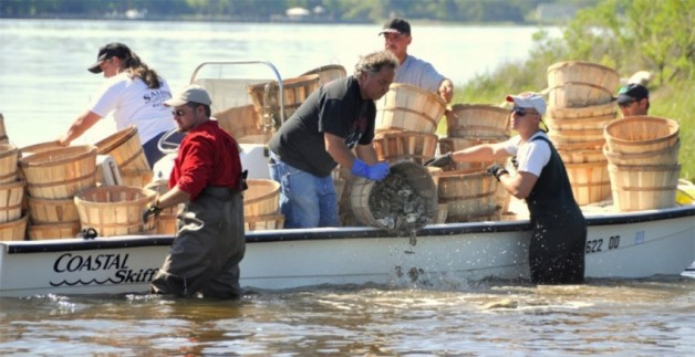 OYSTERS:  the nitty gritty facts…and why we are now RECYCLING!